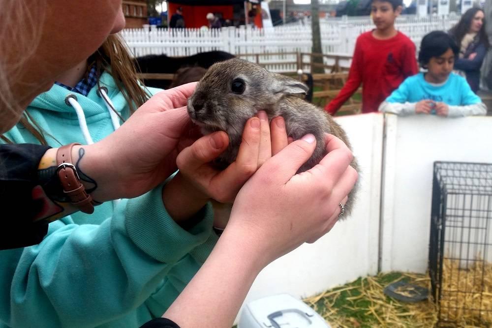 Ascot Bunnies