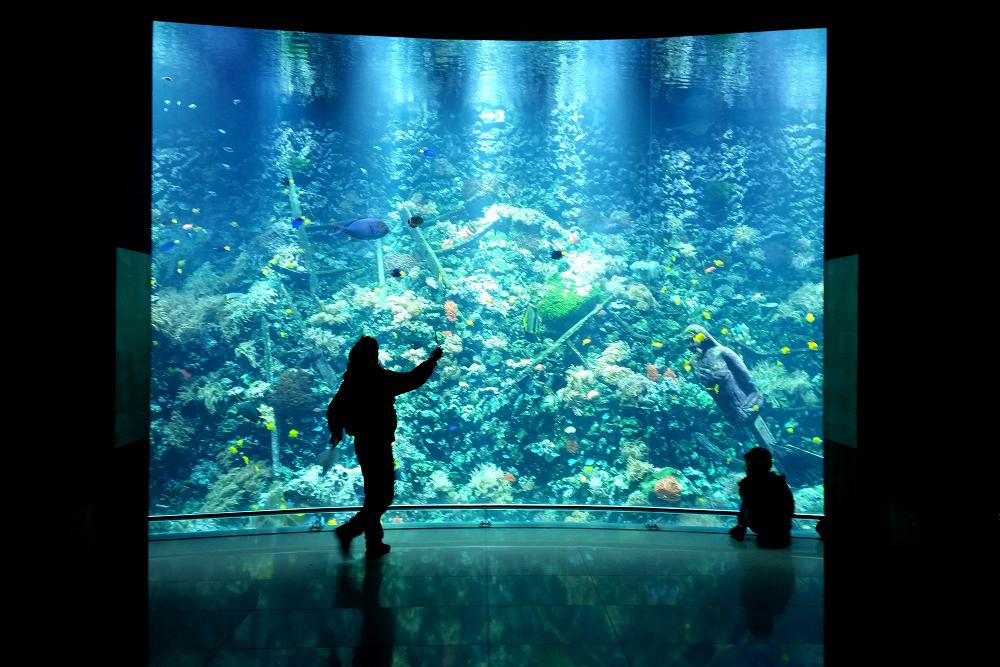 Antwerp Zoo aquarium