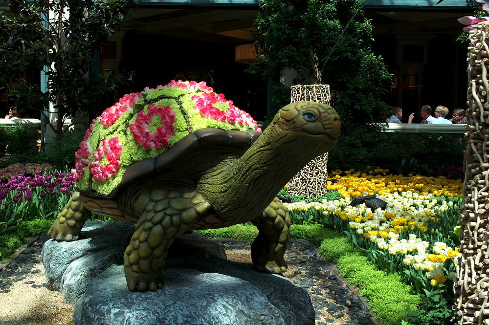 Vegas Bellagio oriental Turtle