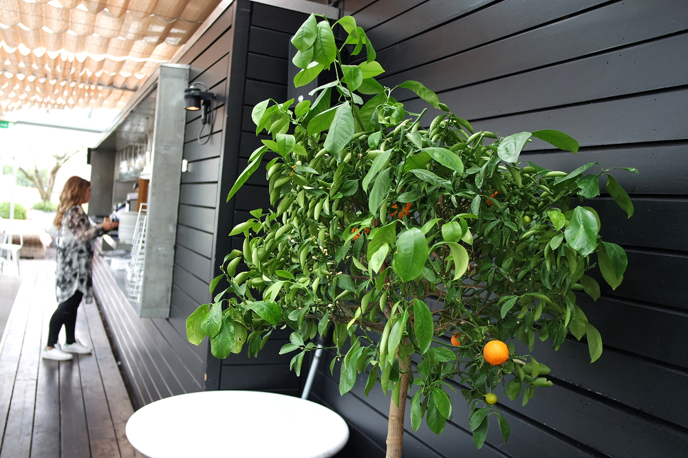 Boundary Roof Terrace London Orange Trees