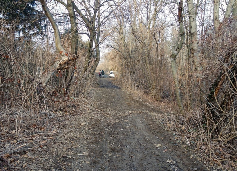 Buda Hills country lane