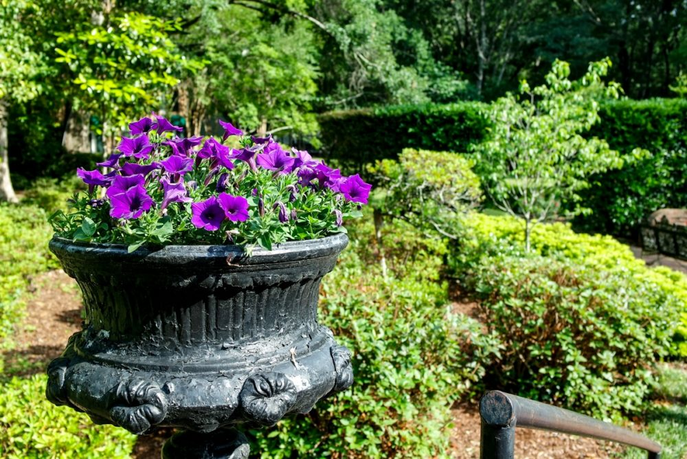 Monmouth Inn gardens
