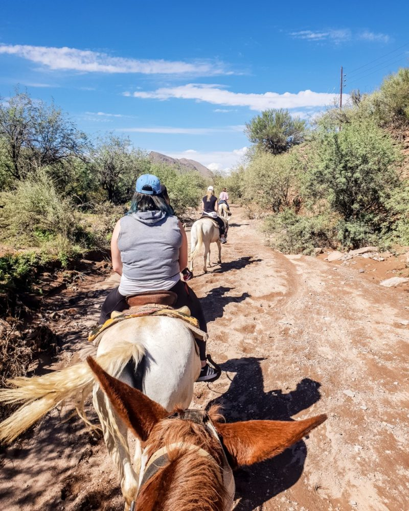 Horse riding through the Sonoran Desert at Betty and Rusty's Cowboy Camp