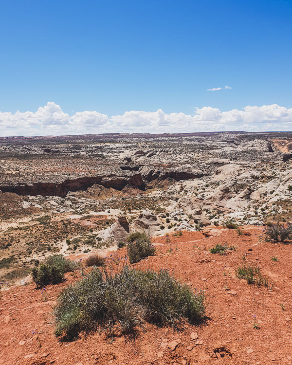 A view of rocks and desert in Canyonlands National Park